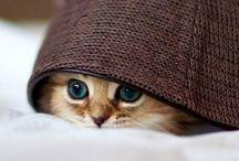 Cats & Kittens <3