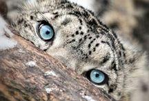 Kingdom Animalia / Animals