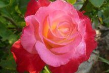 Μy Flowers- My Plants