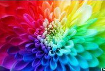 Rainbows / by Léonie Pamina