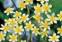 Ślub i wesele wiosną / Ślub i wesele wiosną: kwitnące drzewa, krokusy, szafirki, tulipany, narcyze, konwalie. Cudowne!