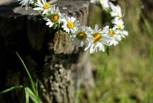 Flowers / Garden
