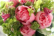 Flowers | Nature