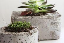 Plants & DIY