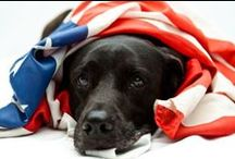 Fireworks Thunderstorms, Loud Noises / Info about dogs and July 4th fireworks, thunderstorms, and other loud noises that scare dogs / by Just Love Pit Bulls