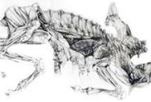 Animal Art - Ewelina L. / Animal drawings and paintings made by Ewelina Lesik.