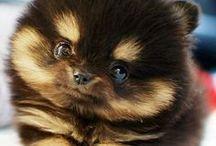 Cute Animals♡ / animals