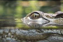 Nature Photography - Ewelina L. / by Ewelina Lesik