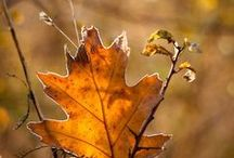 A Pinterest Fall / My first group board.  Please pin all the beauty and love of the fall season. / by Lillianna