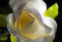 """Elegant SIMPLICITY / """"Simplicity is the ultimate sophistication.""""-Leonardo da Vinci"""