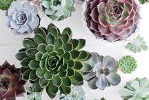 + Succulent