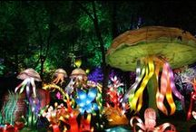 Luminasia / Luminasia ignites as soon as the sun sets. Discover a wonderland of color and light among custom built, larger-than-life Chinese lanterns at this year's LACF!  / by Los Angeles County Fair (LACF)