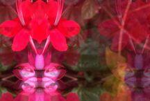 #seresocultos / Fotografias de plantas, flores, árvores e folhas. Contrastando ideias sobrepostas para uma imagética questionadora.  Extrair de cada olhar uma nova interpretação.  Seres ocultos é uma série fotográfica criada desde de 2012 pela fotógrafa Márcia Formigoni. Cerca de 160 fotografias já realizadas, faz parte de seu acervo pessoal.