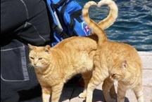 Cats / For Everyone who loves Cats like I do!