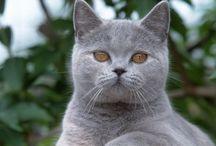 Cats / I Love Kitty Cats! / by Rosie Cruz