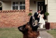 Pets in Weddings / Wedding photography Newcastle, Hunter Valley, Central Coast, Sydney, Margaret River, Perth. www.somethingbluephotography.com.au