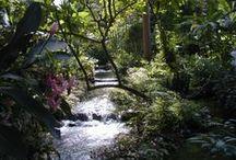 Beautiful Scenes in Nature
