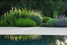 Garden  /  Landscape architecture