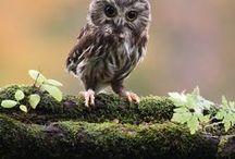 owls / by Sydney Vegezzi