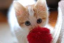 kittens / by Sydney Vegezzi