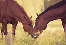 ~Equine xoxo~ / ~A variety of the most beautiful Horses!! Pin as much as you want and anything that has to do with horses, such as quotes, or cute photos  of people with horses! Happy Pinning~  / by Karis Davis