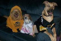 Hawkeye Hounds (and other pets) / Check out these four-legged Hawkeye fans showing their black and gold spirit!