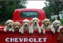 Dogs in Trucks