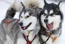 Dogs...Honden