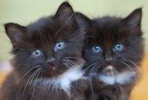Cats ...Katten