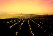 Rincones para dejarse llevar / Descubre los rincones más impresionantes de la Ruta del Vino y el Brandy del Marco de Jerez