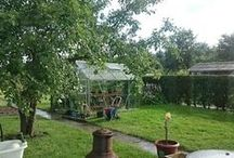 My Garden ♥ (Allotment) ♥