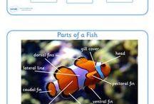 Column Aquariums for Schools