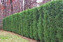 Yards with privacy