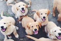 Precious Puppies