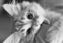 ▼ cuteness ▲