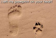 In memory of Snoopy. / I will miss and love you forever, my first fur baby!  / by Sharon Gol