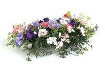 Miniature Flowers & plants / miniature plants / by diana pratt