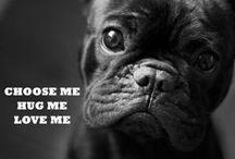 Si j'étais un chien