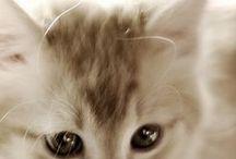 CAT / cats...