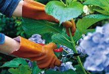 KB Garden / Gardening