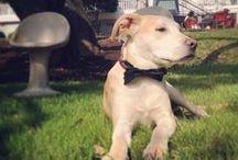 Dogs of Saint Cecilia