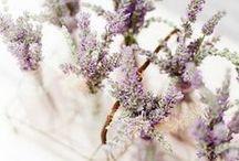 Garden / Design, flower, love
