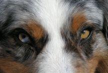 Chiens / #chiens# #dogs#