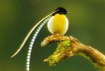 COLORS of NATURE III / Birds, wings and...... / by teresa duarte