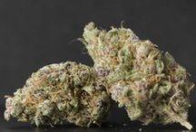 Cannabis Strains / Best quality medical marijuana