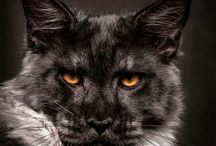chats / #chat# #accessoires pour chats# # a savoir sur le chat# #astuces# #DIY#