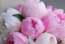 Flowers / by KingsCross222