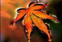 Autumn / by Ni Evani