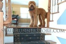 Pets on Stairs / A Stair Runner installed on a wooden staircase may make the stairs safer for your family and even your pets. Many of our customers have fallen; or just as often their dogs fall down the stairs suffering injuries. There is also a risk when carrying a child or dog on stairs. Stair runners provide all family members with additional traction over that of finished wood steps, and help a dog to overcome their fear, all while adding beauty to your entrance. See our Four Legged Customers in this album.