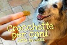 dog's food / cibo per cani fatto in casa